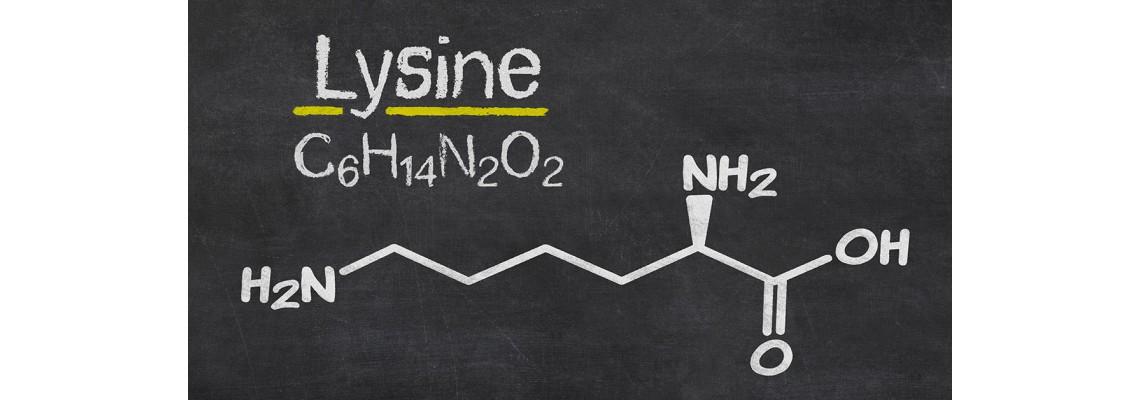 Лизин – есециална аминокиселина за бодибилдинг